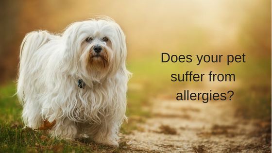 6 Highly Effective Tips to Help Relieve Canine Allergy Symptoms