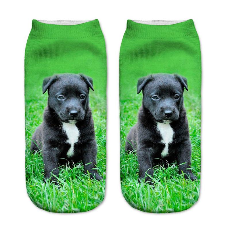 Black Pit Bull Puppy