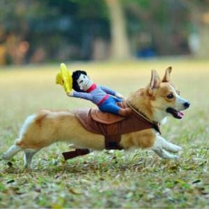 Dog Costume – Cowboy
