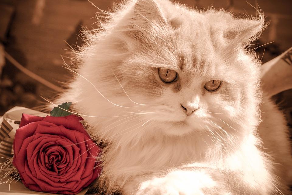 pillow pets cat