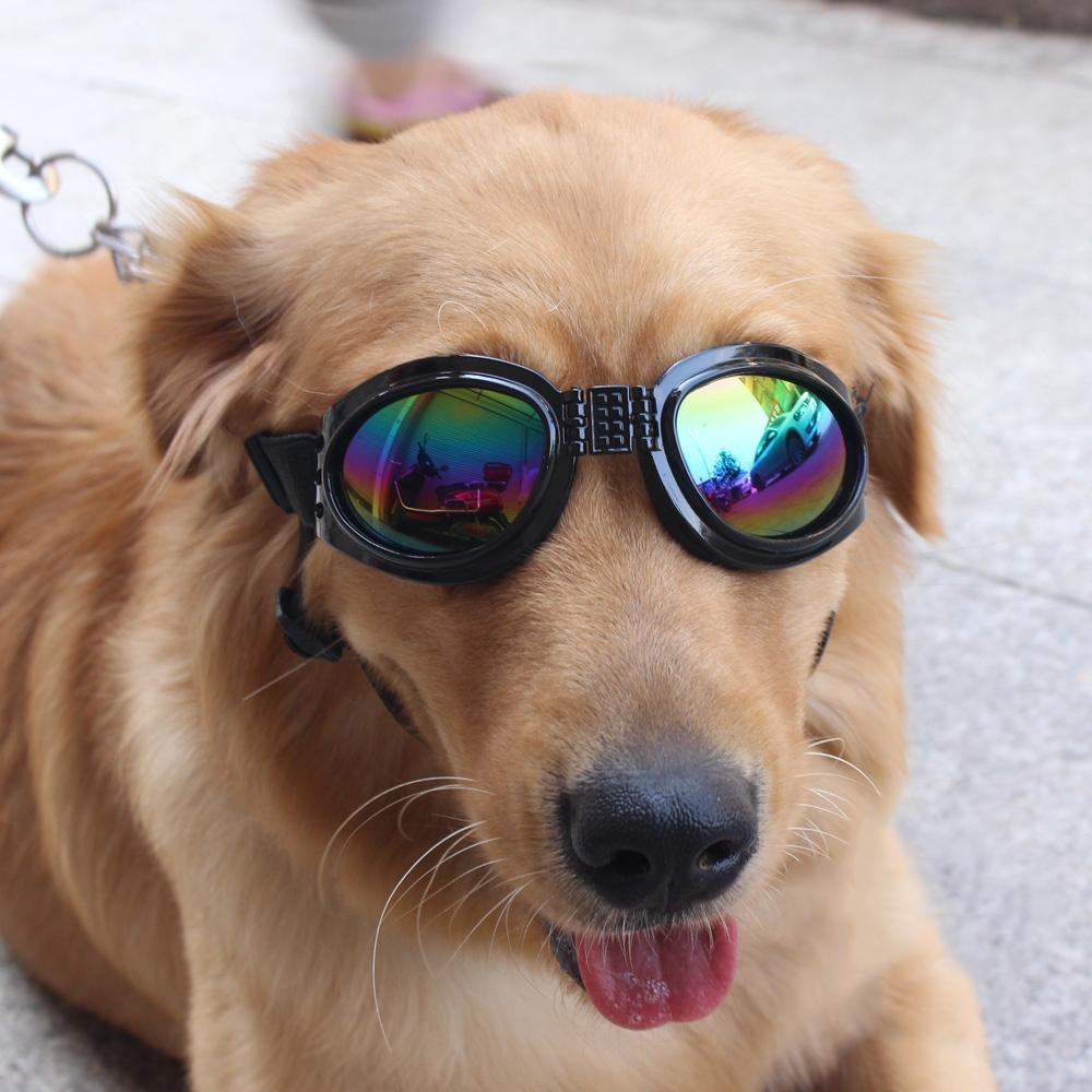 Foldable dog sunglasses