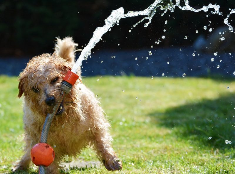 Keeping Dogs Cool on Hot Days