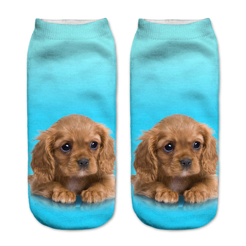 King Charles Cavalier Puppy Socks
