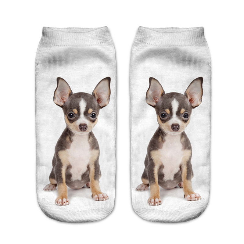 Miniature Pinscher Socks