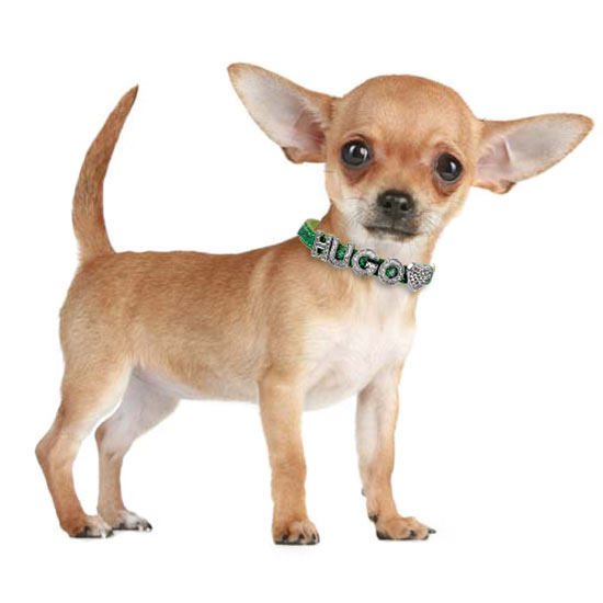 Personalized Dog Collar Chihuahua