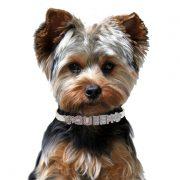 Personalized Dog Collar Yorkie