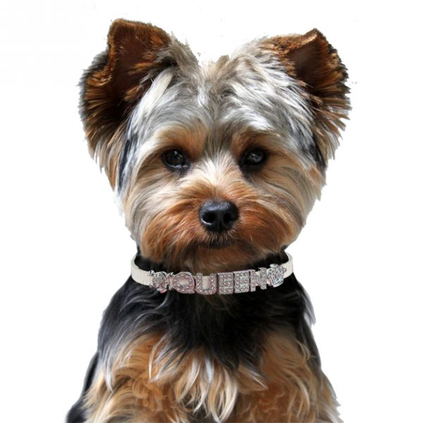 Personalized Dog Collar Yorkie