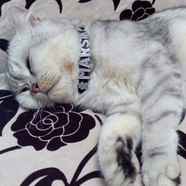 Personalized Rhinestone Charm Cat Collar