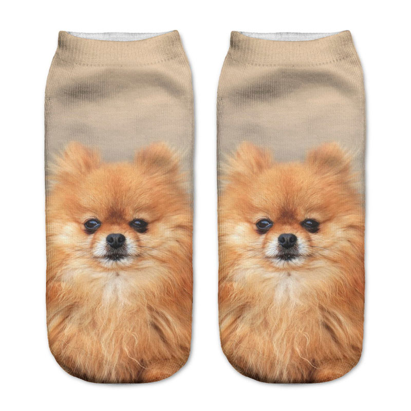 Pomeranian Puppy Socks