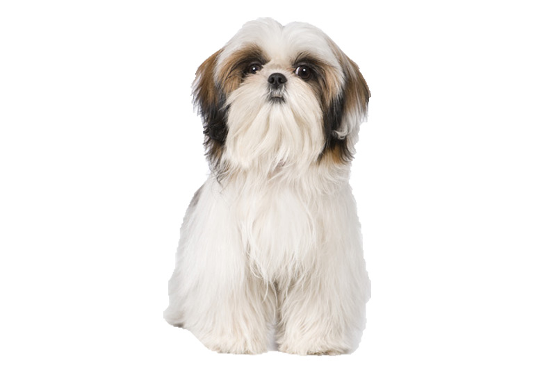 Shih Tzu Gifts Accessories Up To 50 Off Top Pet Gifts