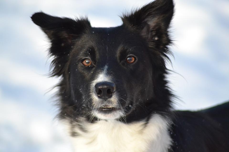 Keep Doggie Warm With These 4 DIY Wrap Ideas