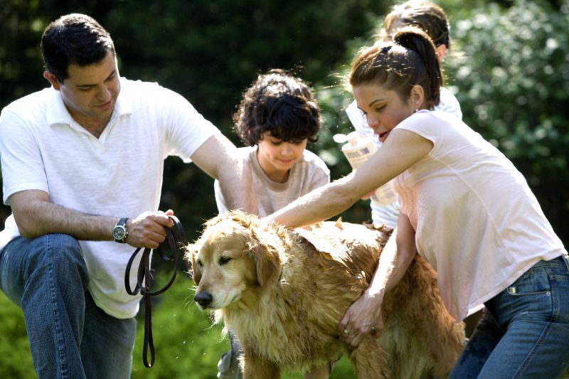 dog breeds for families with children